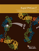 Rapid PNGase F Trifold