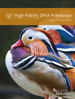Q5® High-Fidelity DNA Polymerase Trifold